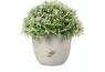 Plante grasse artificielle